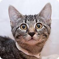 Adopt A Pet :: Dahlia - Irvine, CA