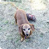 Adopt A Pet :: Rex - San Jose, CA