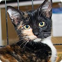 Adopt A Pet :: Sofie - Irvine, CA
