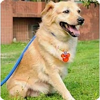 Adopt A Pet :: Meesha - Pending - Vancouver, BC