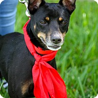 Adopt A Pet :: Maverick - Miami, FL