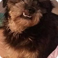Adopt A Pet :: Dale - San Antonio, TX
