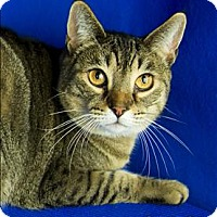 Adopt A Pet :: Fergie - Sherwood, OR