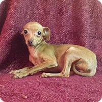Adopt A Pet :: Aurora & Ophelia (Northern California) - Woonsocket, RI