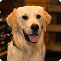 Adopt A Pet :: Steel - BIRMINGHAM, AL