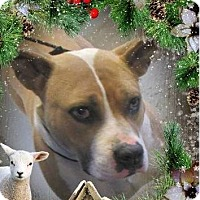 Adopt A Pet :: Aurora:Spayed - Low Fees - Red Bluff, CA