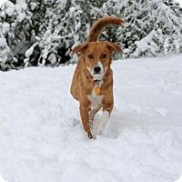 Adopt A Pet :: Queen - West Orange, NJ