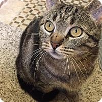 Adopt A Pet :: Juliette - Bonsall, CA
