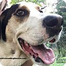 Adopt A Pet :: Otis
