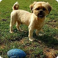 Adopt A Pet :: Teddy - Scottsboro, AL