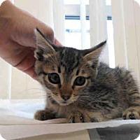 Adopt A Pet :: DIAMOND - San Diego, CA