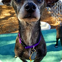 Adopt A Pet :: Zena - New River, AZ