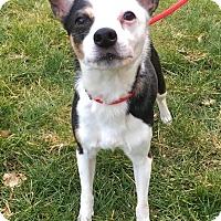 Adopt A Pet :: Buddy - Lafayette, NJ