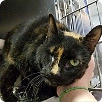 Adopt A Pet :: Katie - Elyria, OH