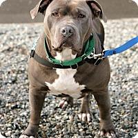 Adopt A Pet :: Gloria - Bellingham, WA