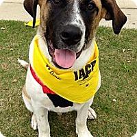 Adopt A Pet :: Gunner - Silsbee, TX