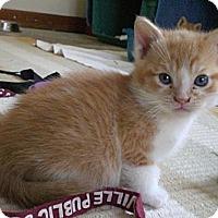 Adopt A Pet :: Devin - Byron Center, MI