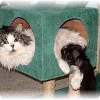 Adopt A Pet :: Meowsers - Lethbridge, AB