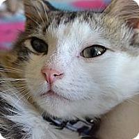 Adopt A Pet :: Dini (Houdini) - Solon, OH
