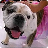 Adopt A Pet :: Hugs*adoption pending* - Gilbert, AZ