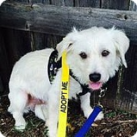 Adopt A Pet :: Elton John - Austin, TX