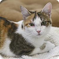 Adopt A Pet :: Lollie - Chicago, IL