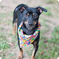 Adopt A Pet :: Major - Kingwood, TX