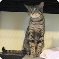 Adopt A Pet :: Ramses - Edmonton, AB