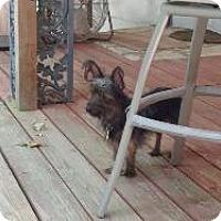 Adopt A Pet :: Maxwell - LEXINGTON, KY