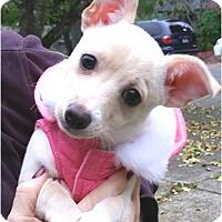 Adopt A Pet :: Edit (Eddy) - Salem, OR