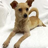 Adopt A Pet :: Benny - Mission Viejo, CA