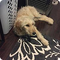 Adopt A Pet :: Rudy - Algonquin, IL