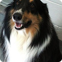 Adopt A Pet :: Bo *New* 4 years old - Stafford, TX