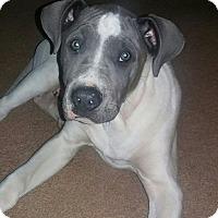 Adopt A Pet :: Mud - Cerritos, CA
