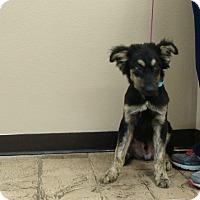 Adopt A Pet :: Blazer - Oviedo, FL