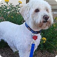 Adopt A Pet :: Toby - Las Vegas, NV