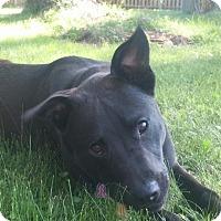 Adopt A Pet :: Onyx - Grafton, WI