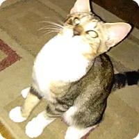 Adopt A Pet :: Codie - Parkton, NC