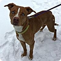 Adopt A Pet :: Tundra - Mt. Pleasant, MI