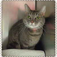 Domestic Shorthair Cat for adoption in Marietta, Georgia - KITTIES