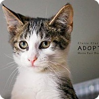 Adopt A Pet :: Barclay - Edwardsville, IL