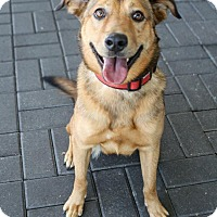 Shepherd (Unknown Type) Mix Dog for adoption in Jacksonville, North Carolina - Riley