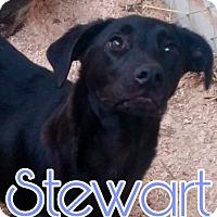 Adopt A Pet :: Stewart - Union City, TN