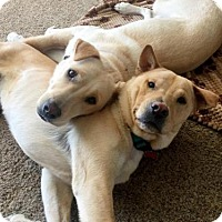 Adopt A Pet :: Koda & Bear - Carlsbad, CA