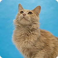 Adopt A Pet :: Buffy - Houston, TX