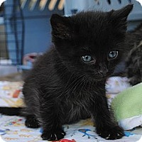 Adopt A Pet :: Tiny Tinker - Palmdale, CA