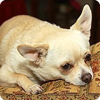 Adopt A Pet :: Rudy - Dacula, GA