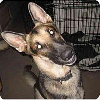 Adopt A Pet :: Bearon - Green Cove Springs, FL