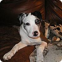 Adopt A Pet :: Tess - Apex, NC