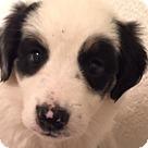 Adopt A Pet :: Panda